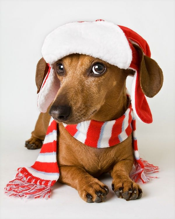 Cold Weather Safety Tips For Your Pet (Great Photo